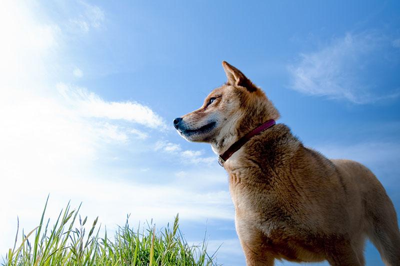 「義犬を弔った山の伝説 ~犬鳴山~」イメージ